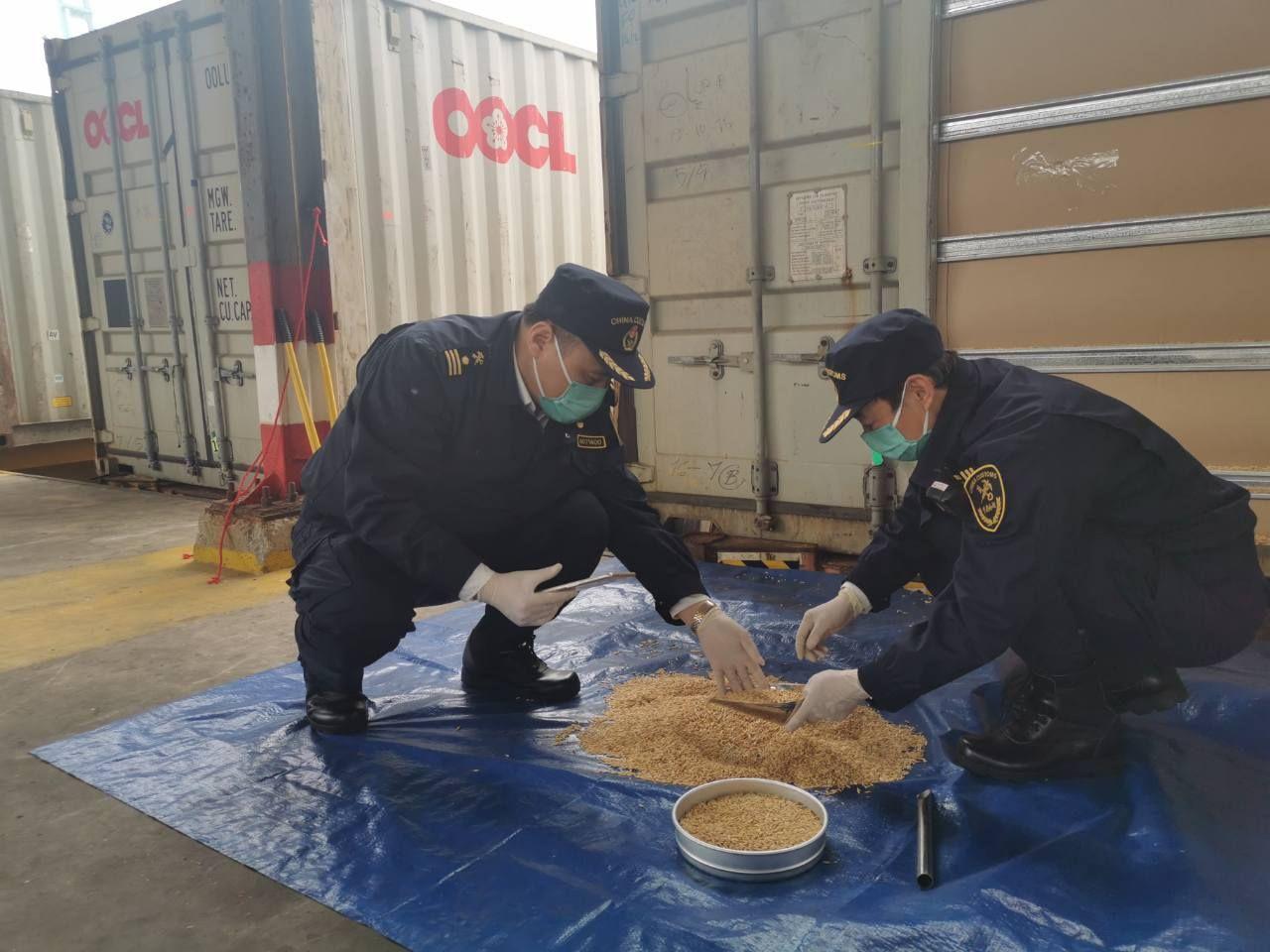 汕头海关所属广澳海关快速验放684.72吨进口燕麦